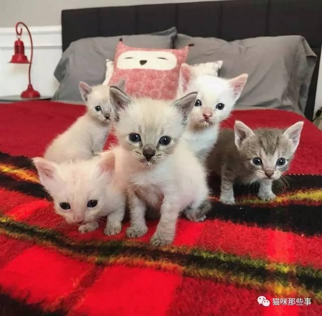 这一家子猫被转移到了寄样家庭,不再需要睡笼子的ta们开始在人类的床