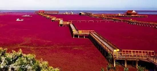 【教师节钜惠】红海滩两日活动(