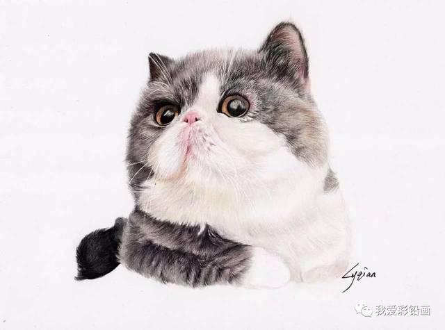 看这里!彩铅手绘加菲猫过程视频
