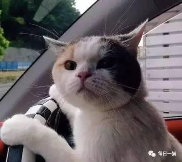 老司机:那还等啥,快上车.