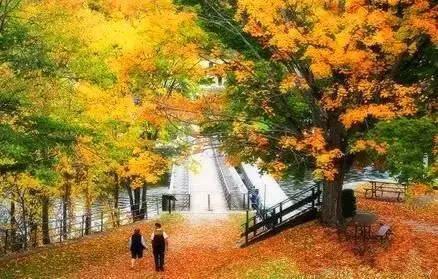 秋意渐浓 枫叶渐红 百里秋景 与君同行