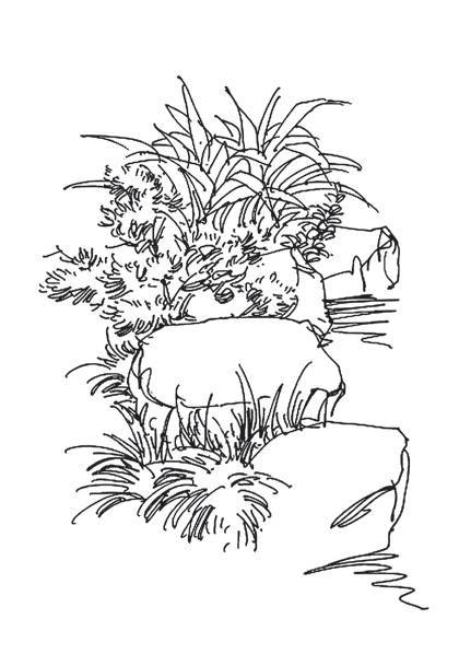 石头与植物的疏密对比图片