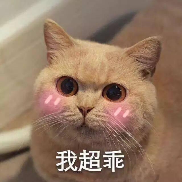 萌你一脸!可爱小猫咪表情包集锦图片