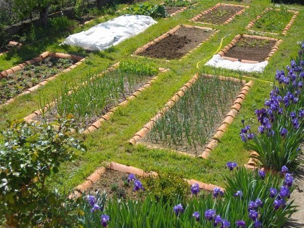 家庭庭院菜园设计——你需要知道什么?图片