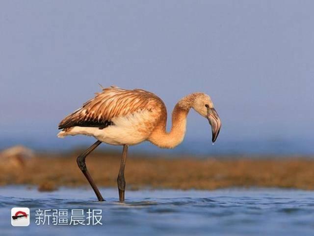 迁徙季近300种候鸟将路过新疆盘点新疆最佳候鸟观赏地 乌鲁木齐龙鱼论坛 乌鲁木齐龙鱼第12张