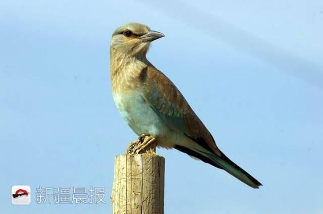 迁徙季近300种候鸟将路过新疆盘点新疆最佳候鸟观赏地 乌鲁木齐龙鱼论坛 乌鲁木齐龙鱼第1张