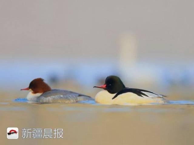 迁徙季近300种候鸟将路过新疆盘点新疆最佳候鸟观赏地 乌鲁木齐龙鱼论坛 乌鲁木齐龙鱼第4张