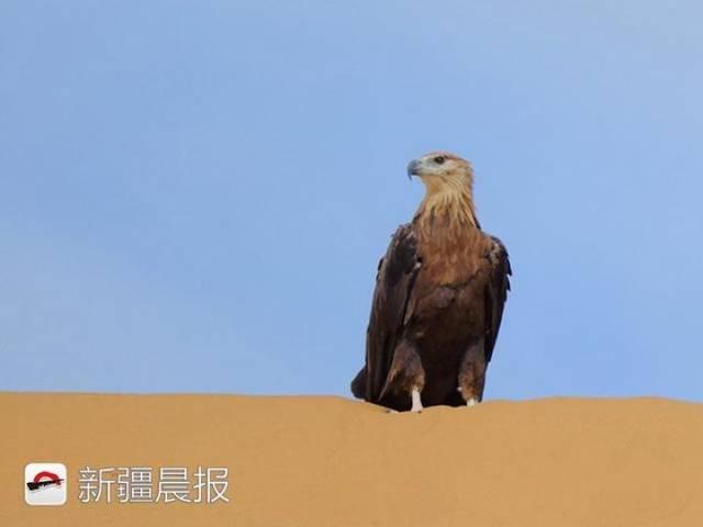 迁徙季近300种候鸟将路过新疆盘点新疆最佳候鸟观赏地 乌鲁木齐龙鱼论坛 乌鲁木齐龙鱼第11张