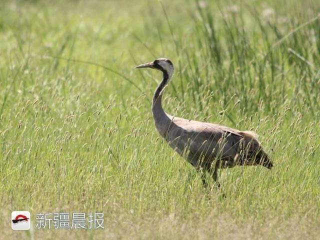 迁徙季近300种候鸟将路过新疆盘点新疆最佳候鸟观赏地 乌鲁木齐龙鱼论坛 乌鲁木齐龙鱼第6张