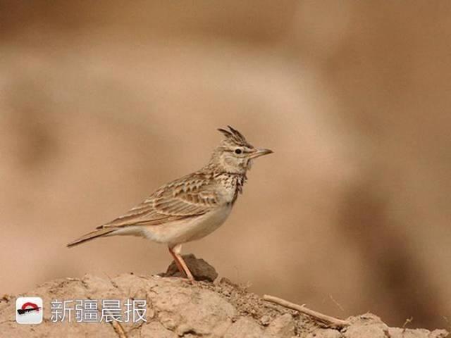 迁徙季近300种候鸟将路过新疆盘点新疆最佳候鸟观赏地 乌鲁木齐龙鱼论坛 乌鲁木齐龙鱼第8张