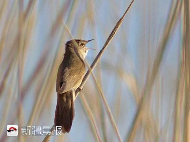 迁徙季近300种候鸟将路过新疆盘点新疆最佳候鸟观赏地 乌鲁木齐龙鱼论坛 乌鲁木齐龙鱼第13张