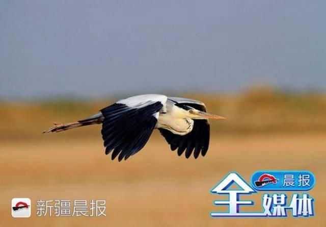迁徙季近300种候鸟将路过新疆盘点新疆最佳候鸟观赏地 乌鲁木齐龙鱼论坛 乌鲁木齐龙鱼第2张
