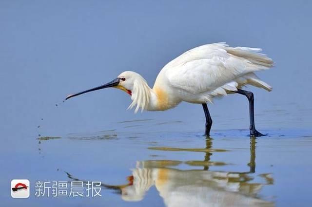 迁徙季近300种候鸟将路过新疆盘点新疆最佳候鸟观赏地 乌鲁木齐龙鱼论坛 乌鲁木齐龙鱼第3张