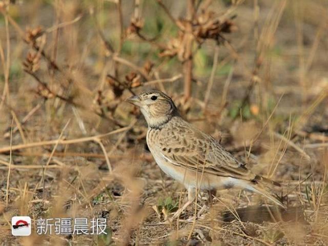 迁徙季近300种候鸟将路过新疆盘点新疆最佳候鸟观赏地 乌鲁木齐龙鱼论坛 乌鲁木齐龙鱼第7张