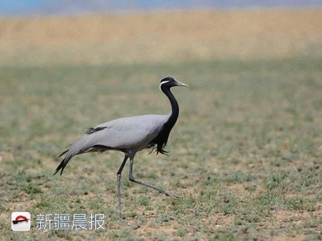 迁徙季近300种候鸟将路过新疆盘点新疆最佳候鸟观赏地 乌鲁木齐龙鱼论坛 乌鲁木齐龙鱼第5张