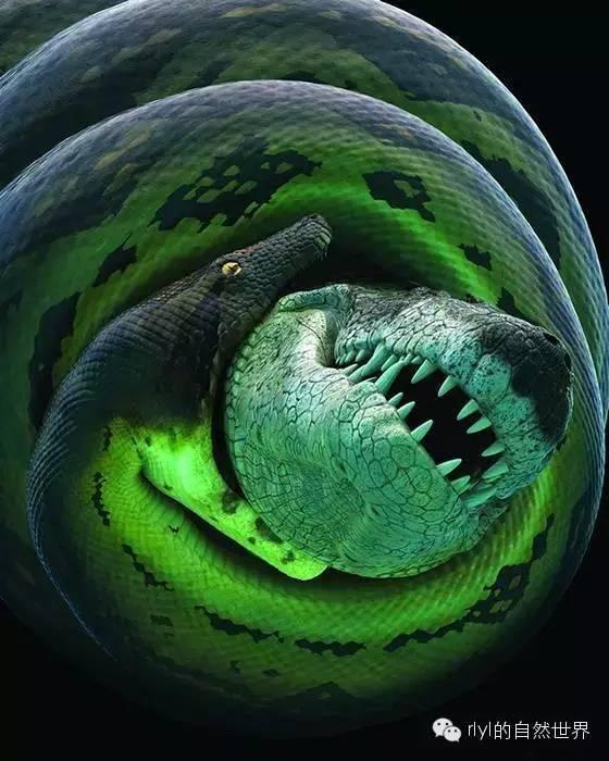 地狱巨蛇——泰坦蟒!