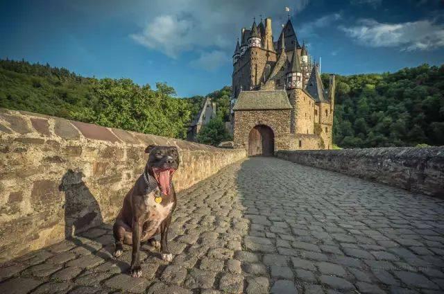 这条狗环游欧洲,游客照张张是大片,堪比好莱坞!