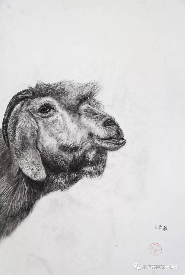 安一画室2017届学生精微素描作品