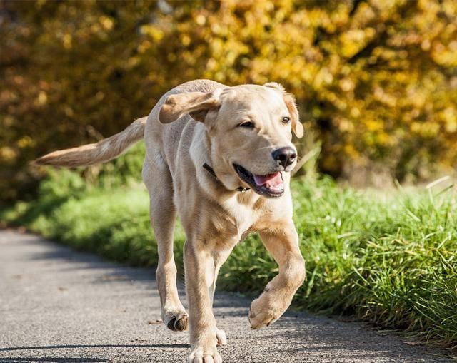 军犬哭囹�a��(�-c_军犬千里追赶火车,最后却死在了主人的怀里,看过的人都哭了!