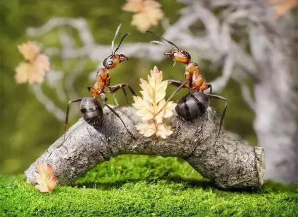 像蚂蚁一样工作,像蝴蝶一样生活