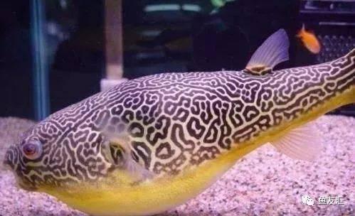 抛开19种鱼的大混养不说那块2米大沉就够帅一脸 长沙观赏鱼 长沙龙鱼第12张
