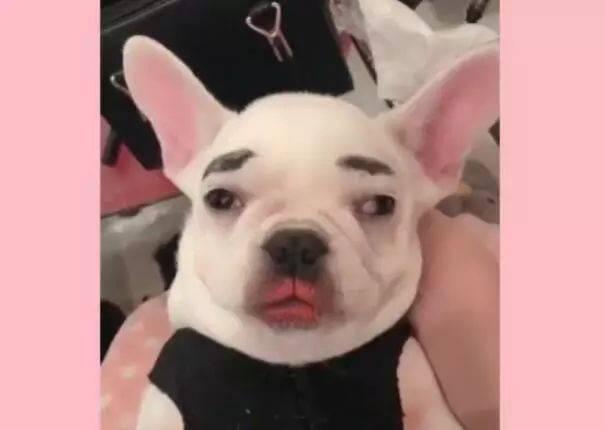 儿童小狗妆容简单图片