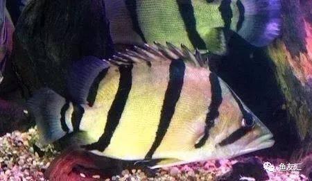 抛开19种鱼的大混养不说那块2米大沉就够帅一脸 长沙观赏鱼 长沙龙鱼第2张