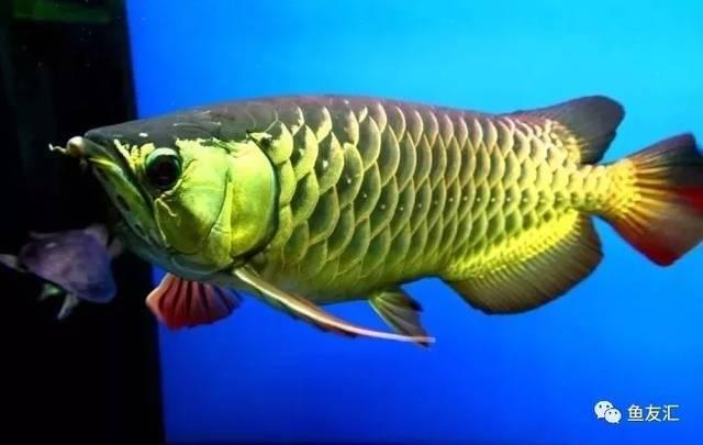 抛开19种鱼的大混养不说那块2米大沉就够帅一脸 长沙观赏鱼 长沙龙鱼第8张
