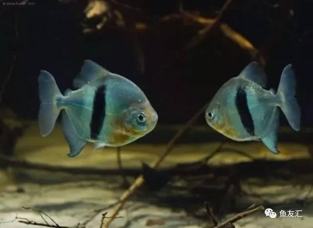 抛开19种鱼的大混养不说那块2米大沉就够帅一脸 长沙观赏鱼 长沙龙鱼第3张