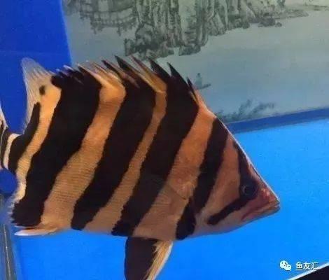 抛开19种鱼的大混养不说那块2米大沉就够帅一脸 长沙观赏鱼 长沙龙鱼第1张