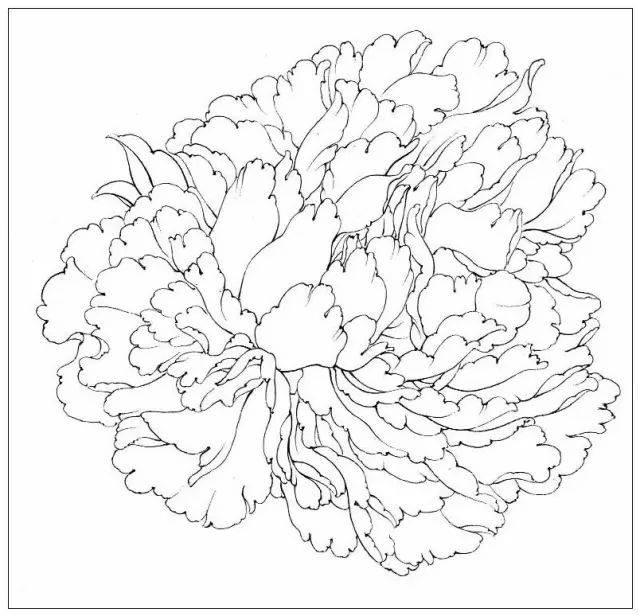 干货|中国工笔画花鸟白描和牡丹花头的染法(含视频教程)图片