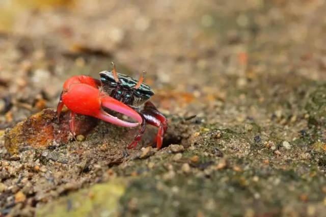 延伸系列:探秘鹿嘴湿地,寻觅招潮蟹