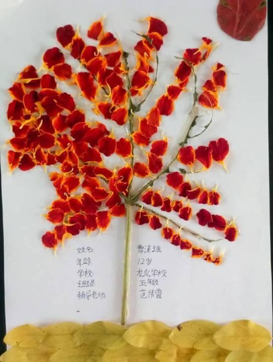 学生365外围收不到邮件_外围、365_外围365官网多少树叶拼贴画作品展第五篇丨欣赏完记得给孩子投票鼓励(⊙o⊙)图片