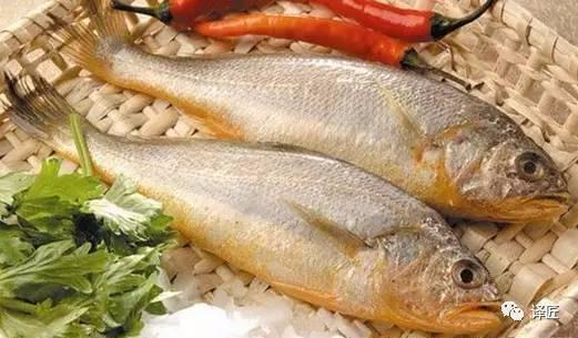 各种食用鱼的图文中英对照