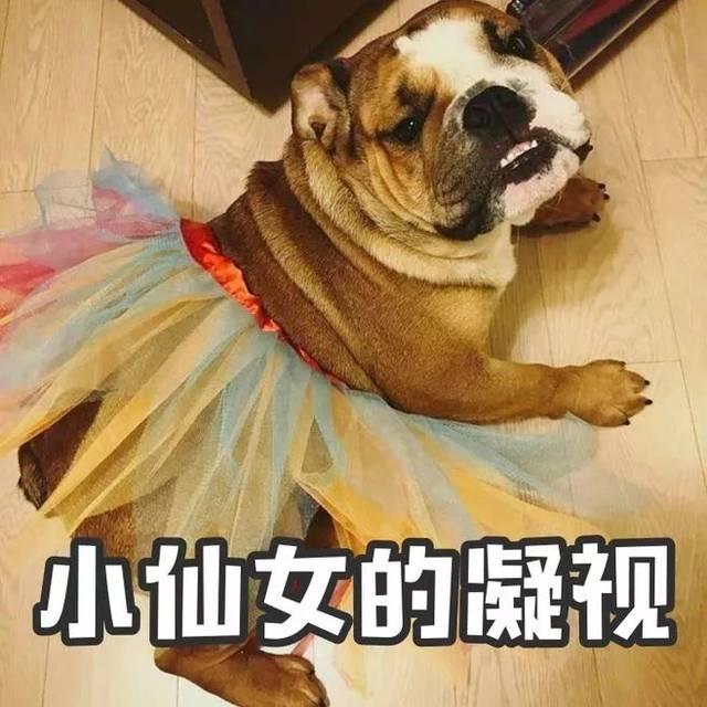 人与动物交配撸撸网_史上最丢人的小偷,因为撸狗被警察抓个正着!