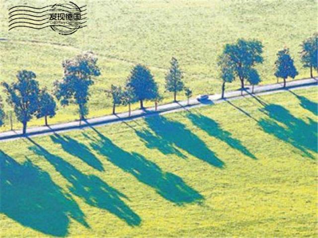 林荫大道之路由菩提树,橡树,枫树和栗子树等高大的古树构成,展现了