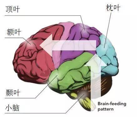 脑适能训练是有针对性的训练,能在更短时间内改善和大脑的结构和通路图片