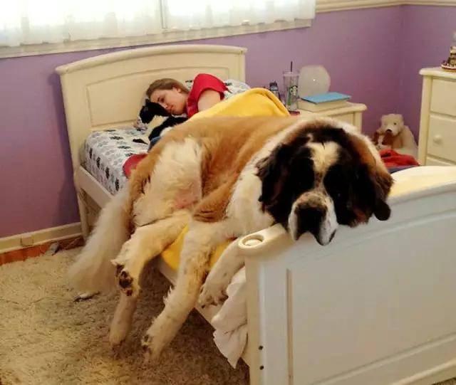 欧美性爱狗_该不该让狗狗上床睡觉?