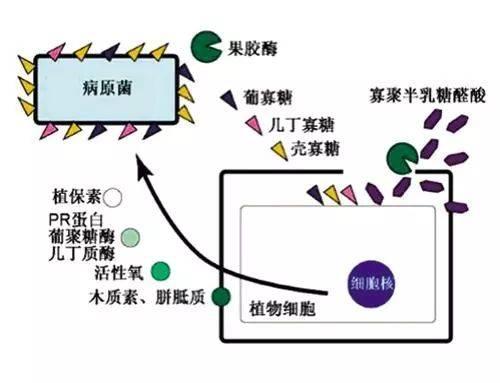 http://www.weixinrensheng.com/yangshengtang/1046356.html