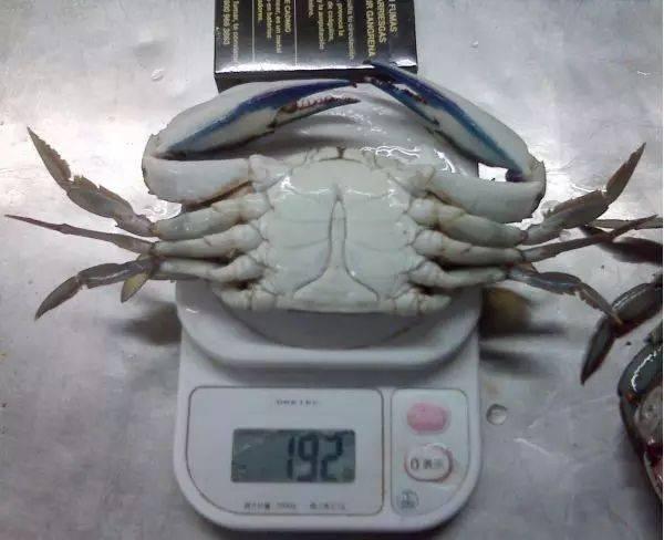 活的面包蟹可以冷冻吗 面包蟹冷冻能保存多久