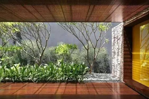 一棵树 一方天井 一方天地图片