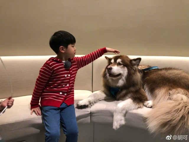 胡歌晒安吉与王可可互动照调侃沙溢怕狗 网友:王思聪也是安吉粉?