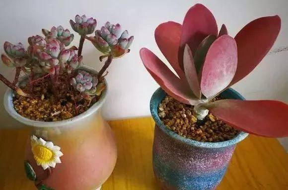 2,兰花花盆底可以 垫几片碎瓦片,然后 铺上一层土,撒点 熟芝麻,然后图片