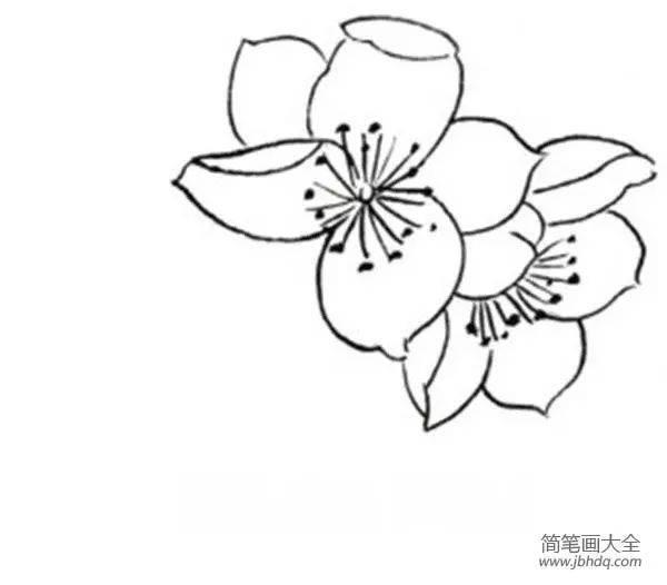 桃花眼影画法步骤固)�_分享白描桃花鸟鸣的绘画步骤. 一,白描桃花局部画法 一簇花朵