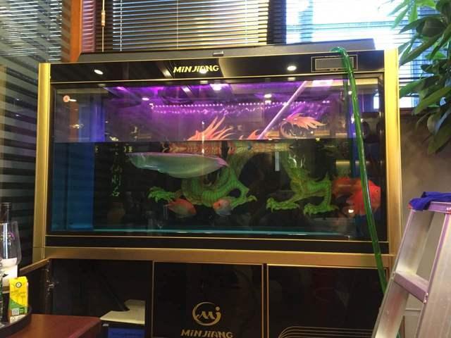 频繁的给鱼缸换水?爱鱼还是害鱼?