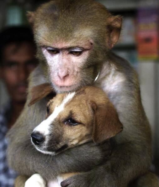 猴子会抱小猫小狗 但有些时候看起来不怀好意图片