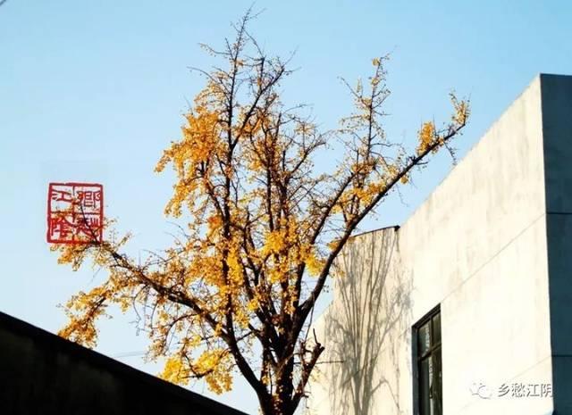 银杏树根简笔画