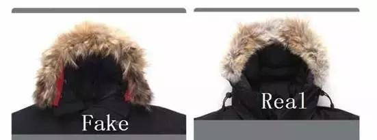 """假货太逼真!加拿大冰钓技巧鹅也中招如何识别真假""""大鹅""""有妙招"""