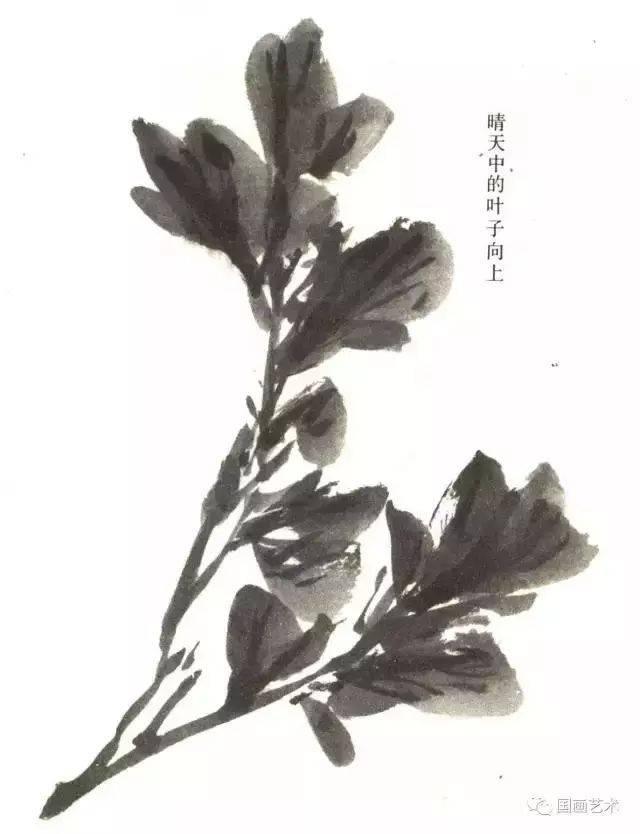 画牡丹叶要有层次,可运用焦,浓,重,淡,清等墨色.图片