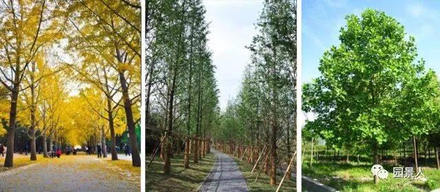 树阵规则景观中暗藏玄机建筑设计规范说明书图片